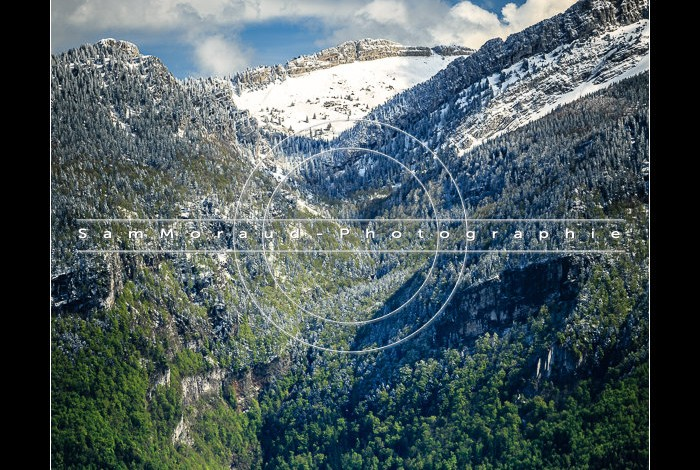 Photo carte postale Chartreuse